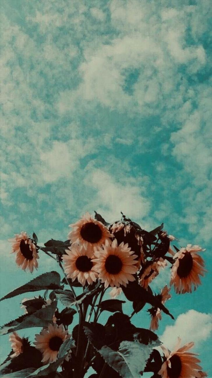 aesthetic, vintage, wallpaper, best, wallpapers, for, iphone, xr
